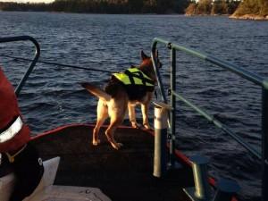 Rejza skallmarkerar från båten och är på väg in mot ön.