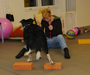 se-evenemang-hund-2014-clinic-fjarrdirigering-grym_tegelstenar_bak