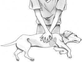 Dog-CPR